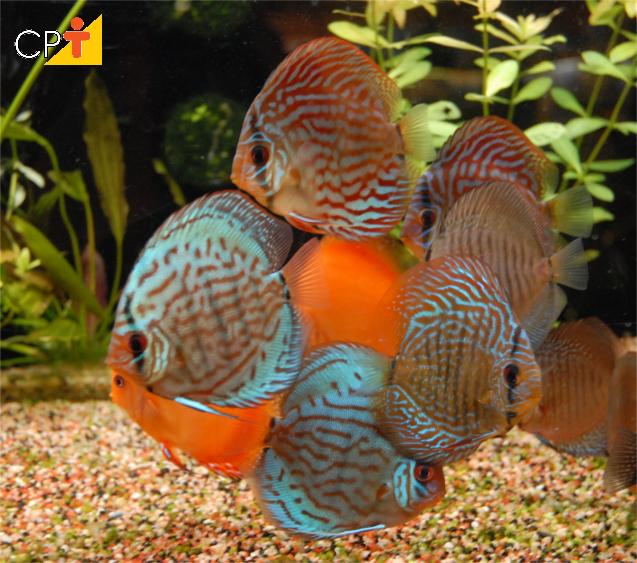 Como fazer manutenção em aquários