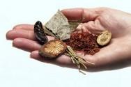 O cultivo das plantas medicinais permite a obtenção de produtos com melhor qualidade terapêutica