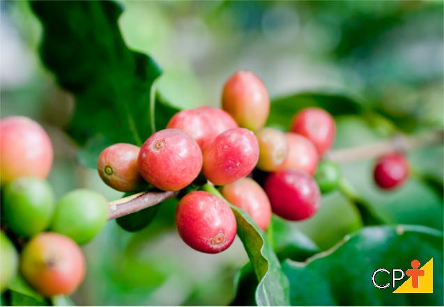Colheita mecanizada de café