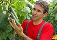 Agricultura orgânica: definição, princípio, objetivo e benefícios
