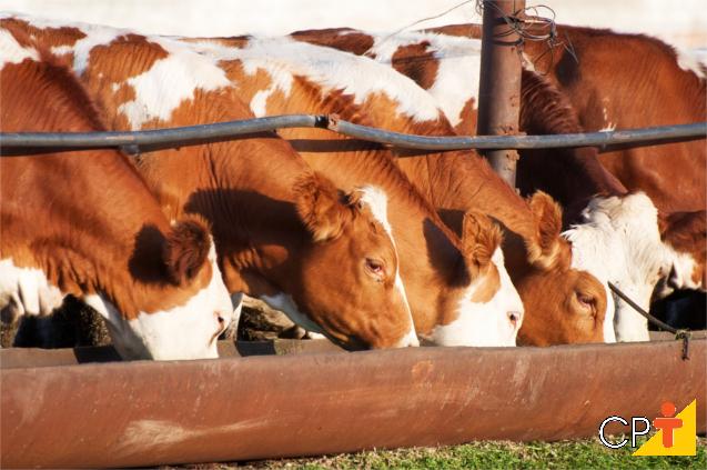 Importância do cálcio e do fósforo na alimentação animal