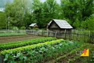 Por que a produtividade da lavoura depende do solo?
