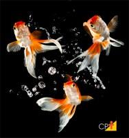 Espécies de peixes de importância econômica para a piscicultura