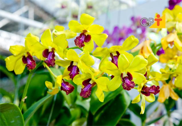 saiba o que fazer para que sua orquídea dê flor dicas cursos cpt