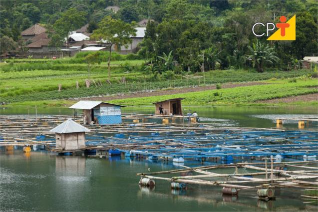 Estrutura para produção de peixes