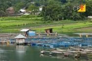 Construção de estruturas para produção de peixes