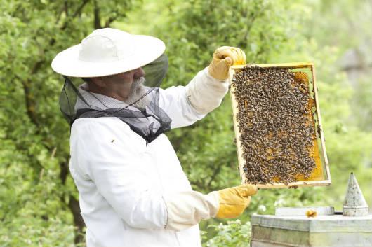 Hoje é dia da apicultura! Comemore!