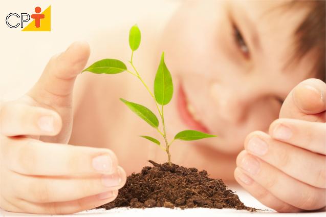 Como as plantas obtêm nutrientes