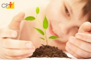 Como as plantas obtêm os nutrientes necessários para sobreviver?