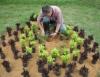 Plantio de mudas na jardinagem