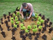 Para preparar um canteiro de plantas herbáceas é preciso revirar o solo, acrescentar os fertilizantes e misturá-los.