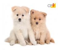 Como limpar os olhos dos cães?