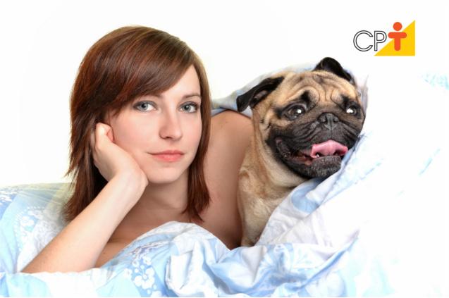Comunicação entre cães e humanos