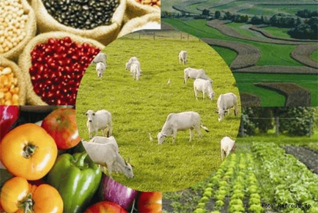 Agropecuária setor que mais cresceu em 2010