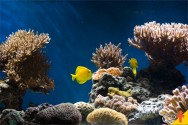 Filtros, bombas e compressores de aquários: tipos e características
