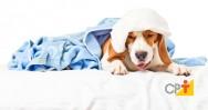 Convulsões em cães e gatos: porque isto acontece?