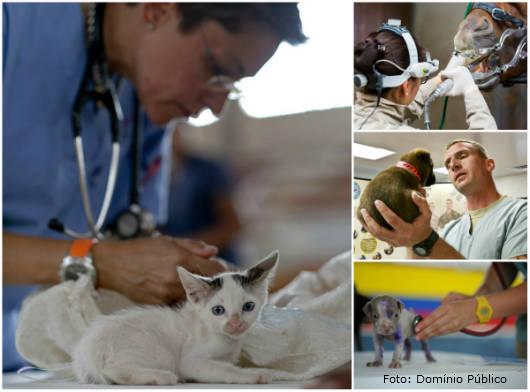 Médico veterinário - conheça as áreas de atuação