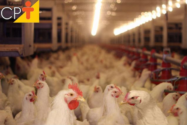 Resfriamento evaporativo em galpão avícola: como fazer?   Artigos Cursos CPT