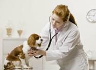 Conheça o Curso a Distância CPT Primeiros Socorros para Cães e Gatos - Principais Acidentes