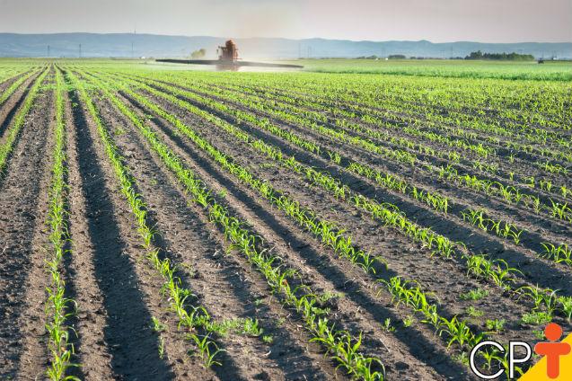 Análise do solo para o plantio da cana-de-açúcar   Artigos Cursos CPT