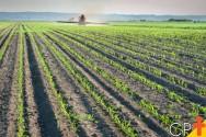 Análise do solo para o plantio da cana-de-açúcar