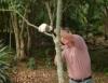 Poda de árvores deve respeitar as características da planta