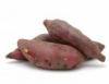 Batata-doce é utilizada na fabricação de etanol