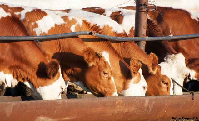 Aditivos mais utilizados na fabricação de ração para bovinos   Artigos Cursos CPT