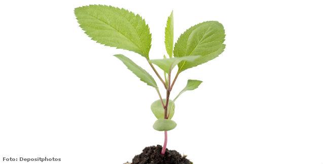 De que são compostas as plantas?   Dicas Cursos CPT