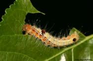 Controle biológico de pragas e doenças: o que é isso?