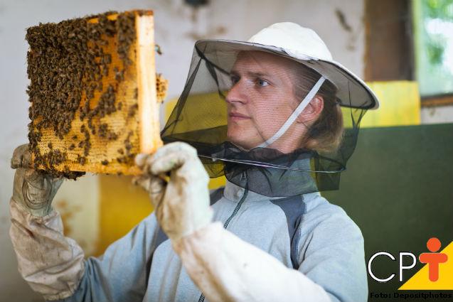 Como avaliar uma abelha rainha   Artigos Cursos CPT