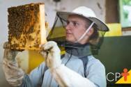 Como avaliar uma abelha rainha