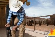 Bleima em cascos de cavalos: como tratar