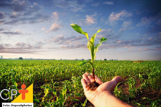 Milho verde: principais e melhores cultivares para plantio   Dicas Cursos CPT