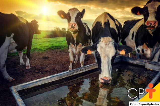 Produção de leite orgânico é alternativa viável para a pecuária   Artigos Cursos CPT