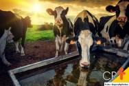 Produção de leite orgânico é alternativa viável para a pecuária
