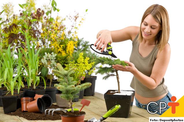 Manutenção de jardins: podas de limpeza e formação   Artigos Cursos CPT