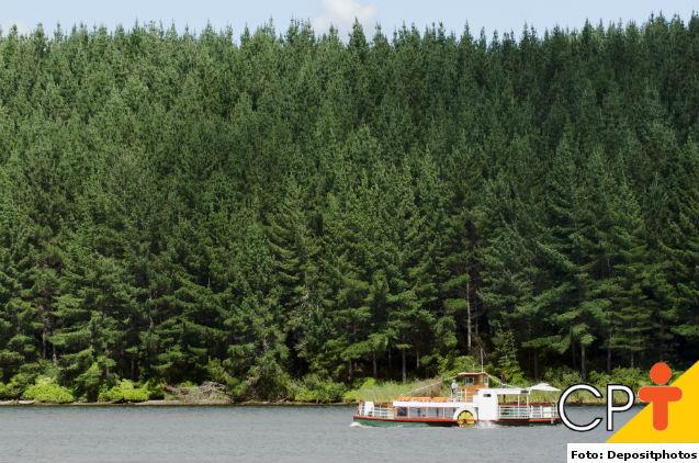 Restauração florestal: necessidade de consumo de recursos naturais   Artigos Cursos CPT