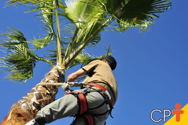 Cultivar coco é vantajoso, mas pragas e doenças atrapalham a produção   Artigos Cursos CPT