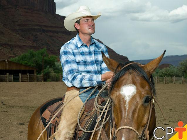 Doma x equitação: qual é o mais importante   Artigos Cursos CPT