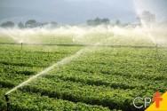 Manejo da irrigação: por que fazer?