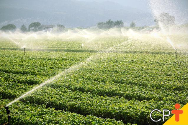 Manejo da irrigação: por que fazer?   Dicas Cursos CPT