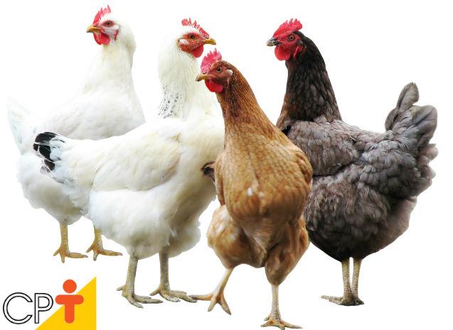 Como forçar a renovação de penas das galinhas?   Artigos Cursos CPT