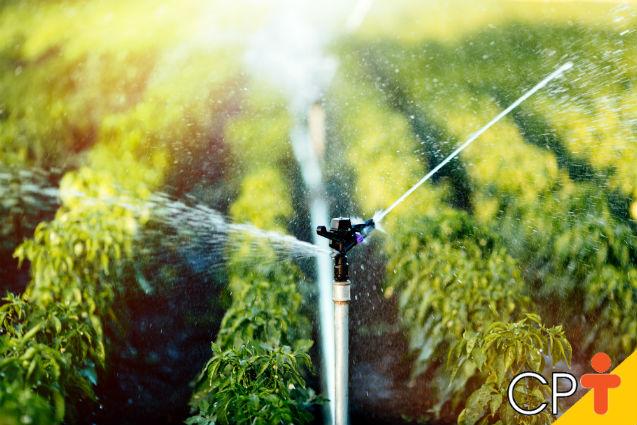 Irrigação: como definir o turno de rega?   Dicas Cursos CPT