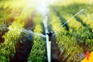 Irrigação: como definir o turno de rega?
