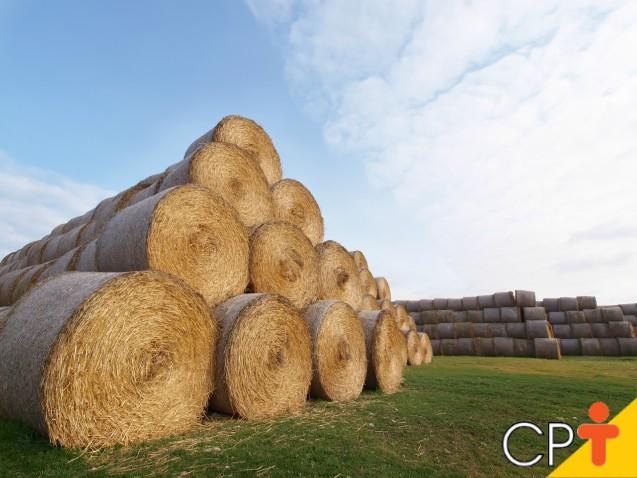 Ponto ideal de colheita das forrageiras para a produção de feno   Artigos Cursos CPT