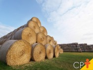 Ponto ideal de colheita das forrageiras para a produção de feno