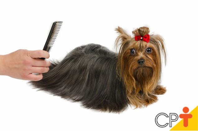 Pentes, escovas e rasqueadeiras: qual o melhor para pentear cães e gatos?   Dicas Cursos CPT