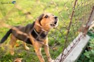 Como ajudar o seu cão a latir menos