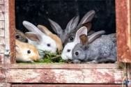 Cuidados importantes na hora de criar um coelho